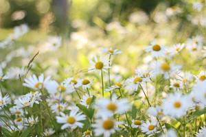 flowers1_edited-2